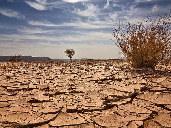Через 25 лет Казахстан может зачахнуть от жажды