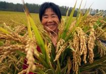Китайцы инвестируют 1,7 миллиардов долларов в сельское хозяйство Казахстана