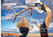 В Казахстане процветает деревянная мафия