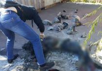 Подмосковные сыщики раскрыли убийство молодой матери, закатанной в бетон