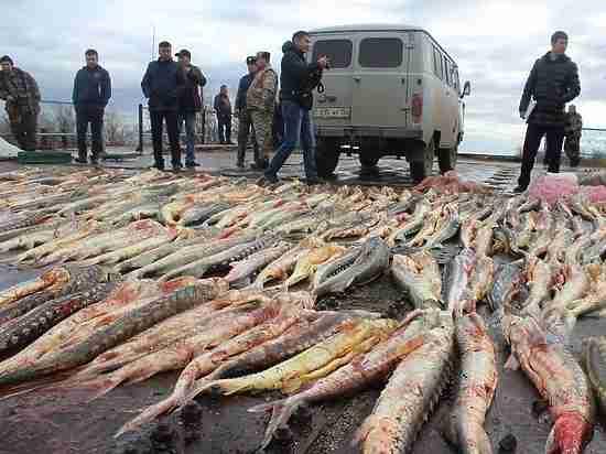 Каждая встреча с браконьерами в каспийской акватории заканчивается стрельбой